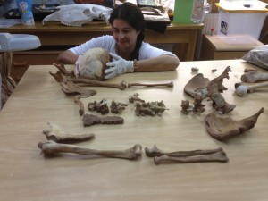 Dr. Marta Alfonso-Durruty examina crânio de 4mil anos de idade na Patagonia, Chile.  Foto Miguel Vilar.