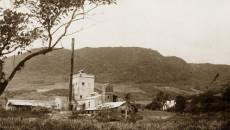 As primeiras plantações de cana-de-açúcar na região litorânea do estado iniciaram por […]