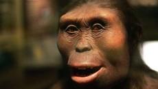 Depois dos debates sobre o Homo naledi, foco da paleoantropologia voltou-se novamente […]