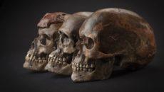 Há 14 mil anos, os europeus eram negros e tinham olhos azuis. […]
