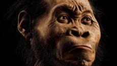 Espécie de hominídeo descoberta na África do Sul é mais recente do […]